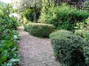 Le jardin au centre de la ville for Haie jardin anglais